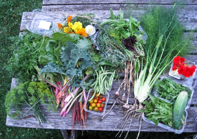 kim's homegrown produce, July 2010